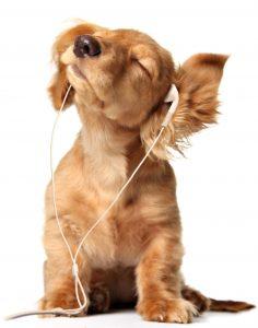Hundeversicherung Hundehaftpflichtversicherung
